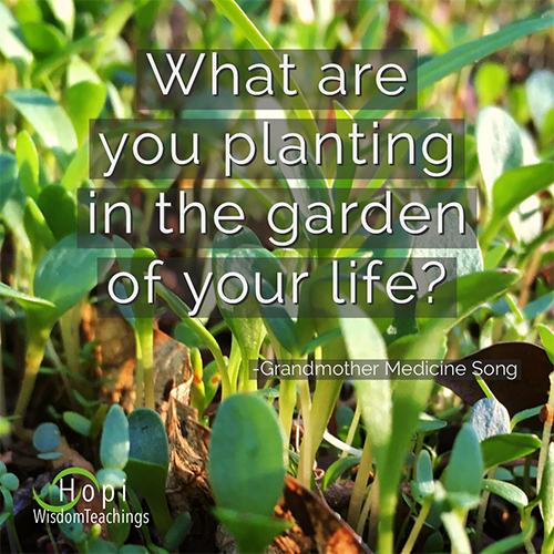 """What are you planting in the garden of your life?"" Hopi Wisdom Teachings"