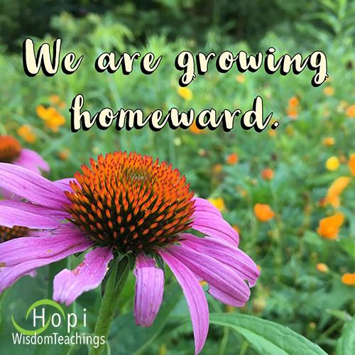 """We are growing homeward."" - Hopi Wisdom Teachings"