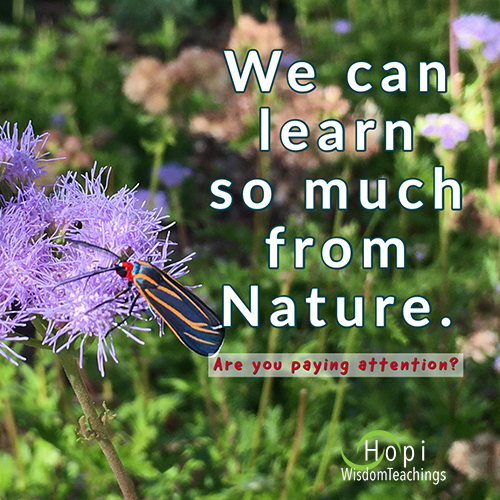 """""""We can learn so much from Nature. Are you paying attention.?"""